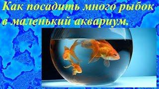 Как посадить много рыбок в маленький аквариум.