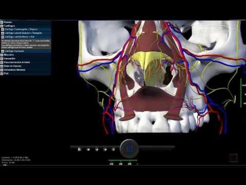 3D Nasal Vista - Demo 01 - YouTube