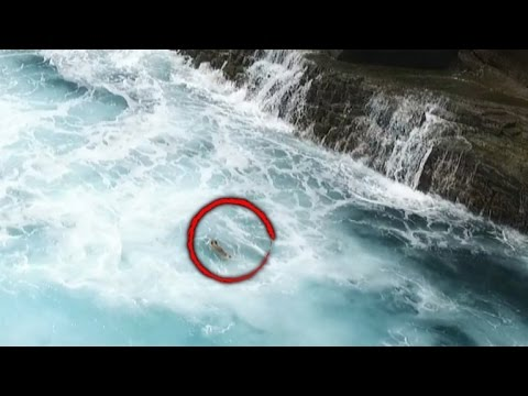 Drone Captures Rescue of Dog Swept Off Cliffs, Plunging into Rough Waters