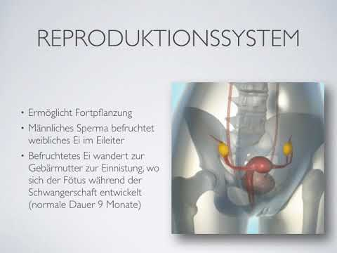 133 Reproduktionssystem - YouTube
