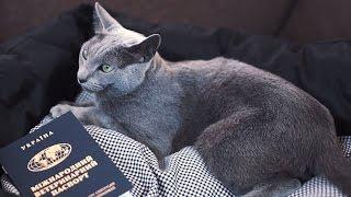 Как перевезти кошку через границу ➠ Советы ветеринара