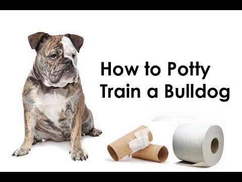 Bulldog Training Tips : How to Potty Train a Bulldog