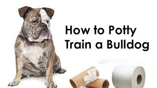 Bulldog Training Tips : How To Potty Train A Bulldog