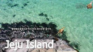 강아지와 제주도 / 리트리버 수영 / 강아지 수영 / …