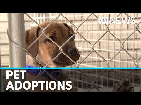 More people adopting pets during coronavirus pandemic   ABC News