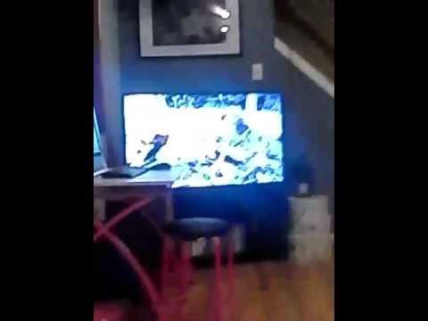 Mouse movie and ribbon playing with cats