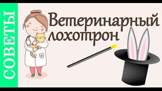 Как вызвать ветеринара на дом. #Советы_ветеринара(, 2016-02-16T15:19:18.000Z)