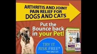 Helpful Vancouver Vet  - How to tell if your dog has arthritis - Helpful Vancouver Vet