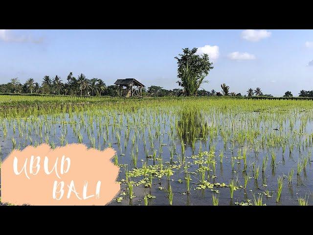 ✈️ BALI : A la découverte des RIZIERES d'Ubud ✈️