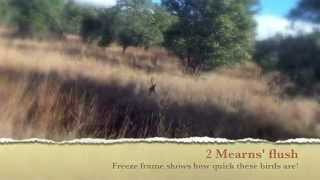 Arizona Mearns' Quail Hunting Guide Service 2014 2015 Winter Gopro Footage