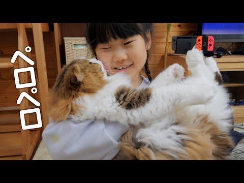 娘の帰宅を嬉しそうに出迎えペロペロしてコタツでじゃれる猫