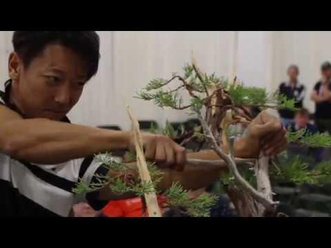 Bonsai Demo By Taiga Urushibata Youtube