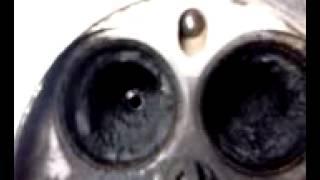 жөндеу мотордың 1AZ-FSE