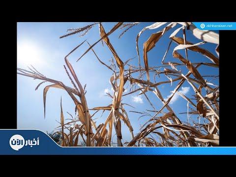 أغسطس الماضي من الأكثر حرارة في التاريخ والعلماء يحذرون  - نشر قبل 1 ساعة