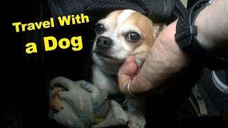 愛犬と飛行機で旅する時に役立つ8つのコツ。実際にチワワが国際線に乗ってみた