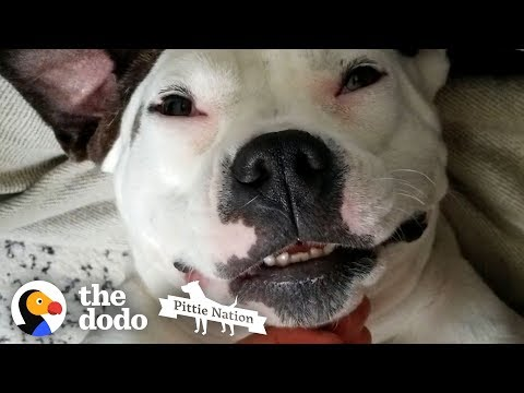Pittie Who Was Shot Lives Like A Princess Now | The Dodo Pittie Nation