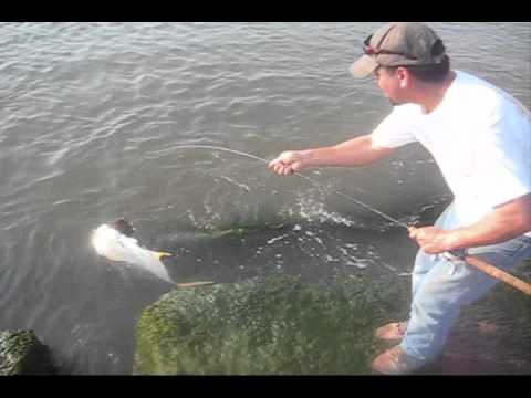 Big jack fish in galveston tx jetties youtube for Galveston jetty fishing report