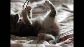 Кошка ищет своего человека! Москва. (хозяин найден)