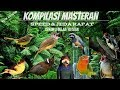 Ampuh Kompilasi Masteran Suara Burung Kicau Speed Jeda Rapat Cukup Waktu 3 Bulan Secara Konsisten Audio(.mp3 .mp4) Mp3 - Mp4 Download
