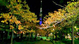 2017 Oku-Asakusa Sanyabori Park excavation autumn leaves corridor 山谷堀紅葉回廊