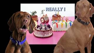 What Dogs Need - Funny Vizslas