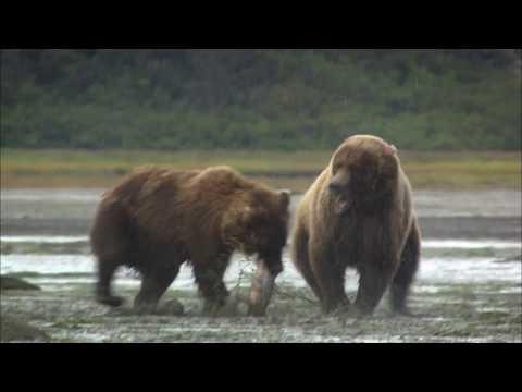 Hunting Alaska - Krimson Trail - Kodiak, Alaska
