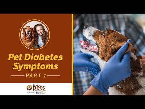 Pet Diabetes Symptoms (Part 1 Of 2)