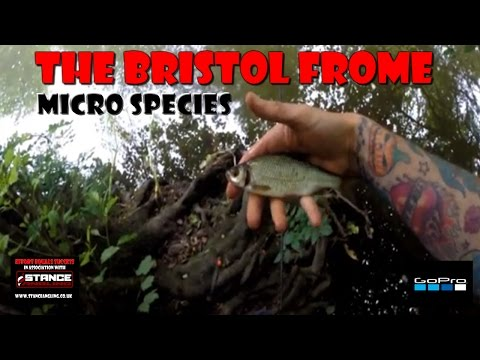 The Bristol Frome | Micro Species | Summer 2016