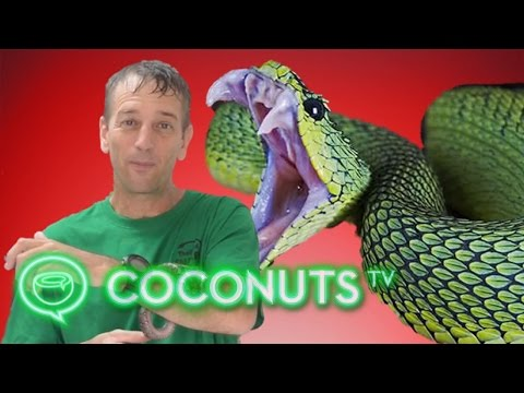 Thailand's Toilet Snake Epidemic Explained By Expert Vern Lovic | Coconuts TV