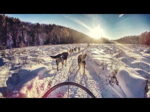 Dogsledding In Haliburton, Ontario With Winterdance Dogsled Tours