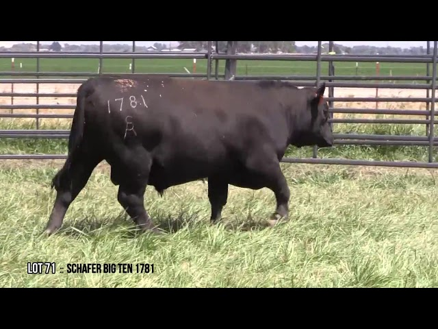 Mid Valley Bull Sale Lot 71