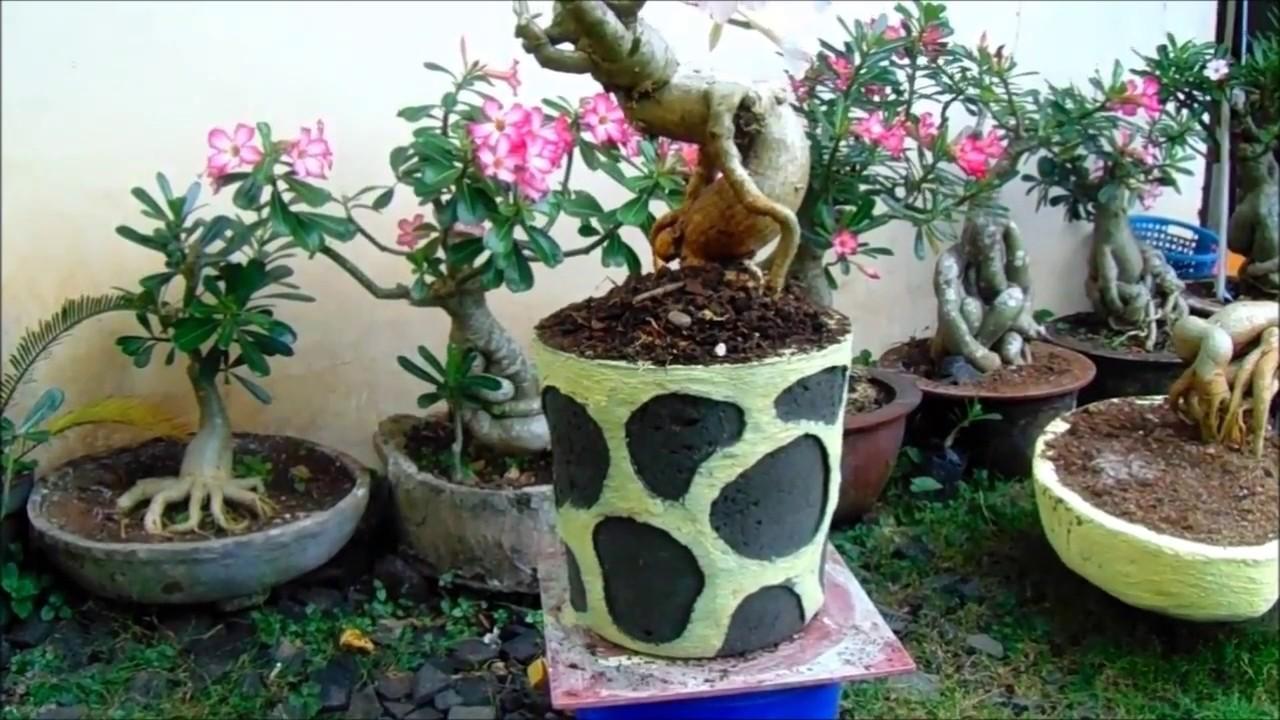 How to make adenium cement pots  Cara mudah membuat pot adenium  2 ... 5ec3beeb31
