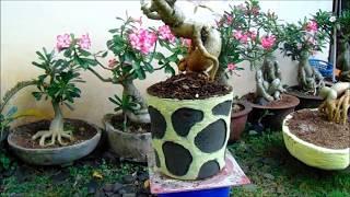 How to make adenium cement pots [Cara mudah membuat pot adenium #2]