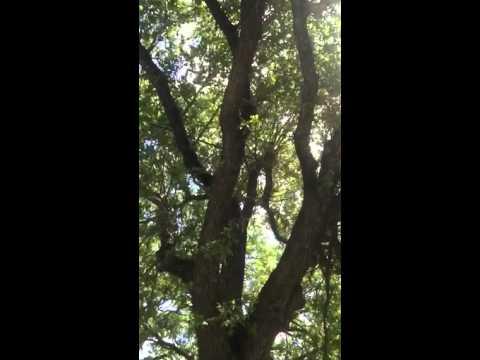 Appreciating the mighty oak tree