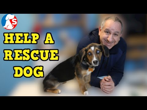 Training dog to stay home alone - Teach a dog to wait - Part 1 from YouTube · Duration:  12 minutes 8 seconds