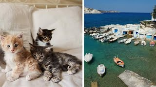 Dream job for all cat lovers Get paid to take care of cats on glorious Greek island