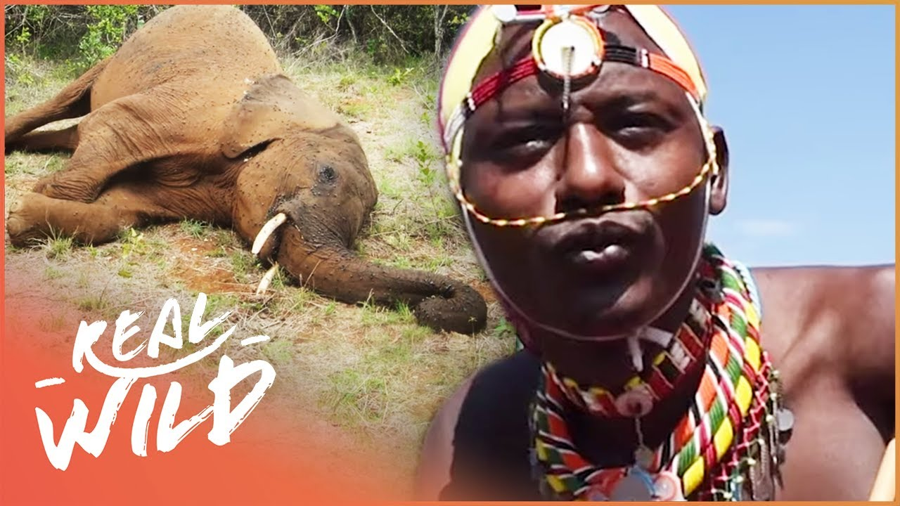 Download Tribes Vs Animals: Kenya's Struggle For Sustainability | Giving Nature A Voice S1 EP8 | Real Wild