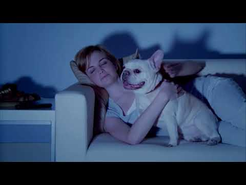 preen-pets---handcrafted-natural-dog-treats---usa-made
