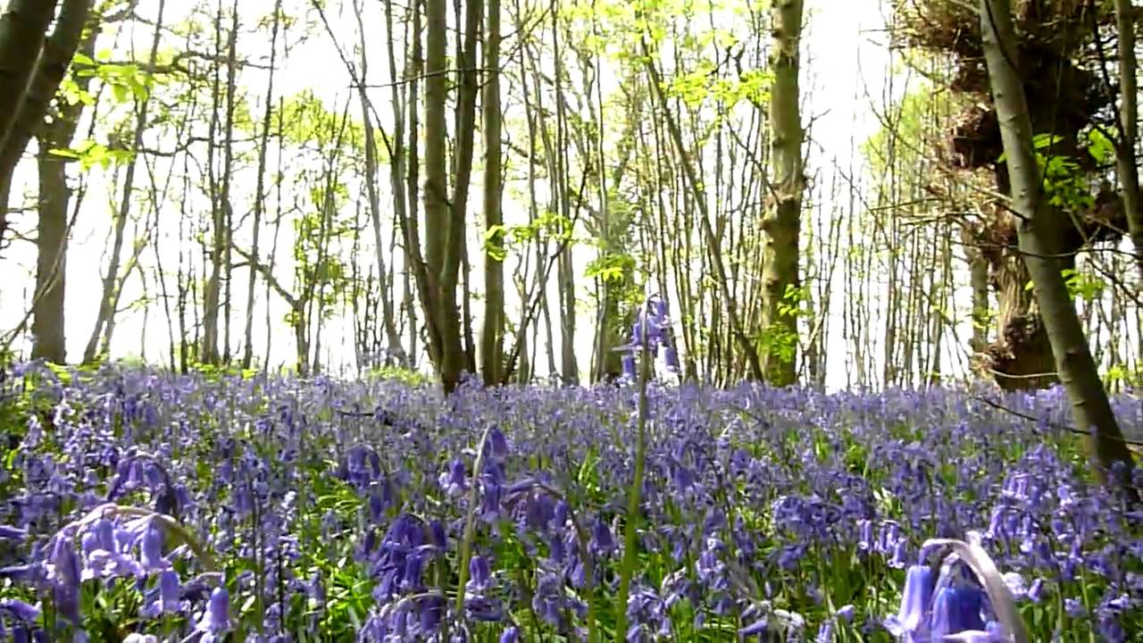 Bluebell Woods A Perfect Day In English Countryside Spring Flowers