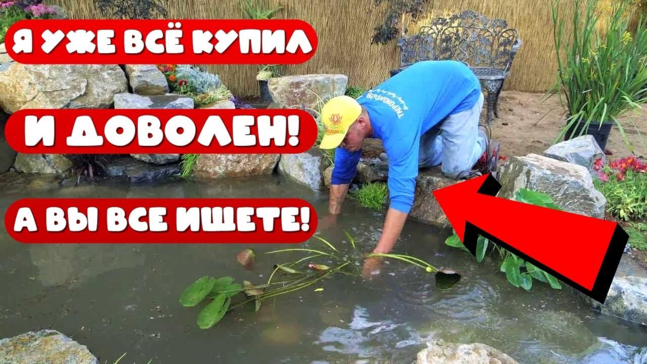 Питомник растений для дачного пруда. Где купить плавающие растения для пруда?- Гиацинт, пистия и др!