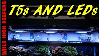 LED T5 Combo Lighting Long Term Review