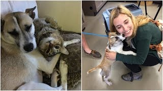 lady adopted the saddest dog in the shelter she figured out a solution for the dog anxiety