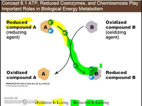 Ch 6.1c - Redox Reactions and Reduced Coenzymes (NADH) in ...