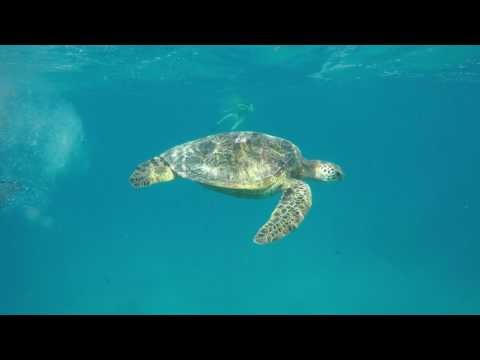 We swam with sea turtles in the Pacific Ocean off the coast of Hawaii! Honu Heaven!