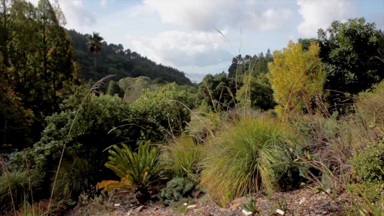UC Botanical Garden at Berkeley - YouTube