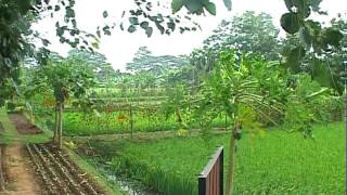 Rice-Fish Farming_1D40A.mov