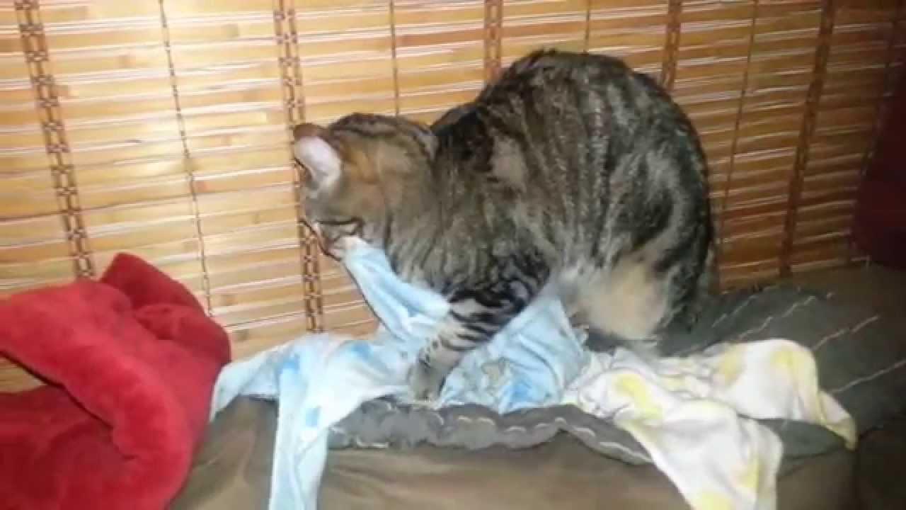 cat skin tumor