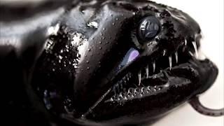 5 реально существующих подводных монстров!