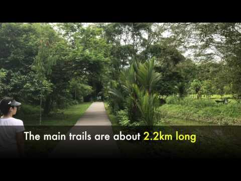 Calling All Nature Buffs: Windsor Nature Park Is Singapore's Largest Nature Trail