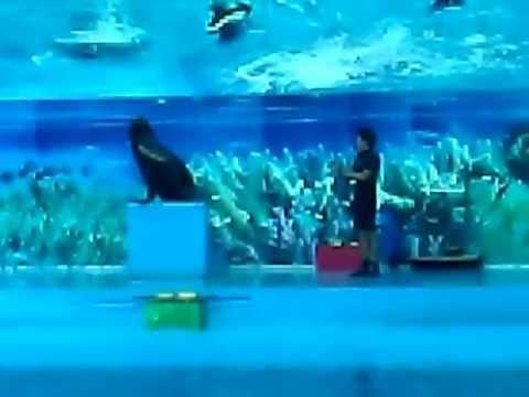Xiếc sư tử biển